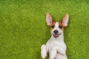 Lee más sobre el artículo Emilio Cuenca – Fotografía profesional para perros