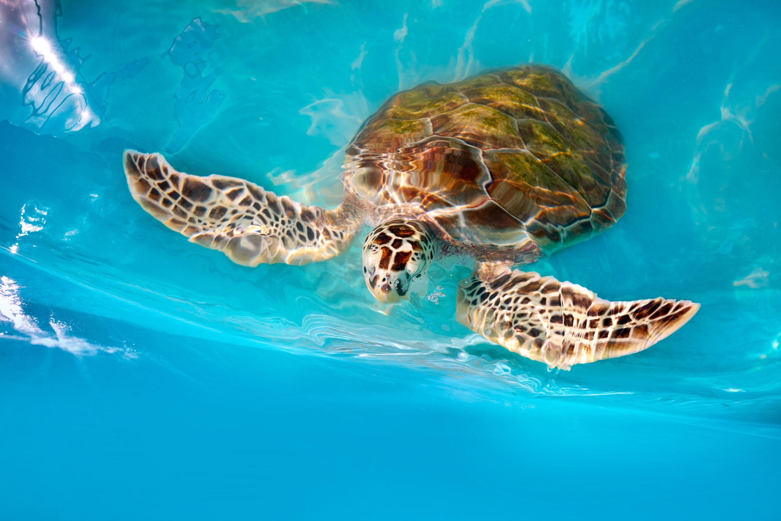Fotomontaje tortuga marina